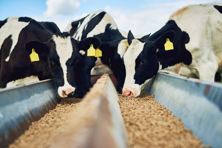 LIVESTOCK-PETS-AQUACULTURE FEED & FEED INGREDIENTS | EUROPAMARK
